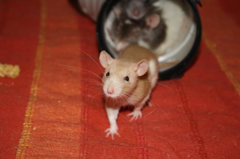 Les nakama ! Rats1210