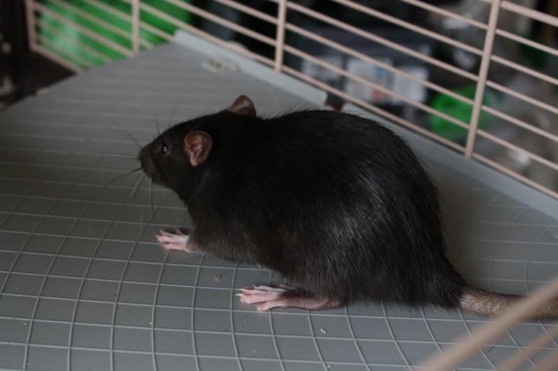 Les nakama ! Rats1211