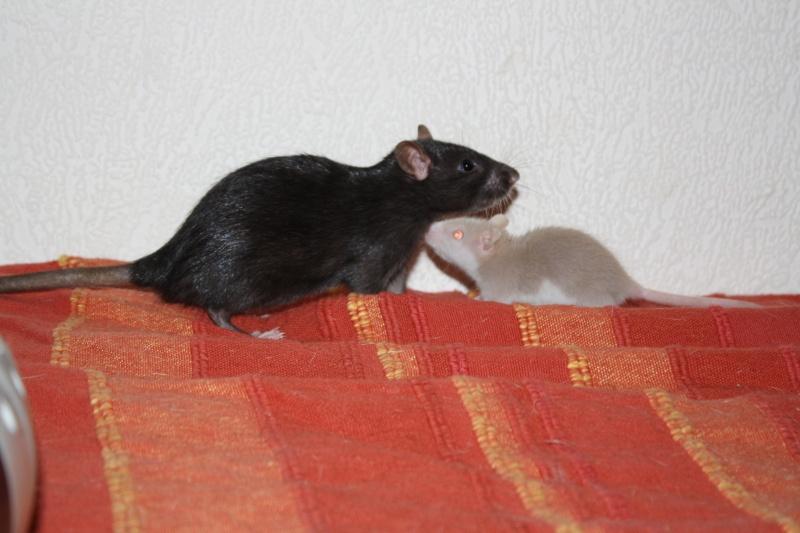 Les nakama ! Rats1212