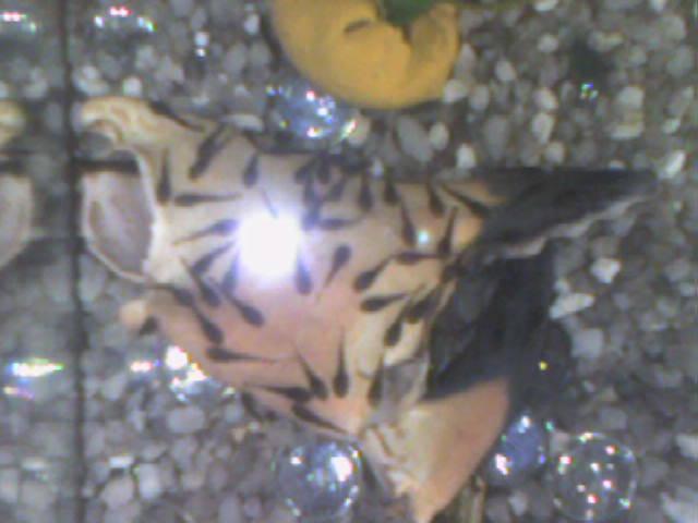 mes  aquariums de 100 et 200 litres Photo-12