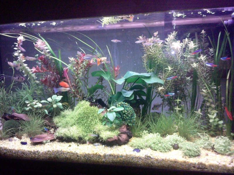 mes  aquariums de 100 et 200 litres Photo010