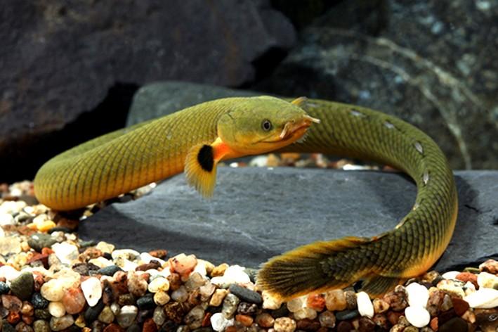"""lancement d'un bac avec """"poissons roseau"""" Poisso11"""
