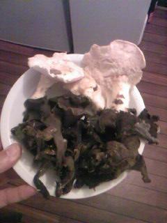 some mushroom ( pas ceux de mario bros ) - Page 2 Sp_a0881