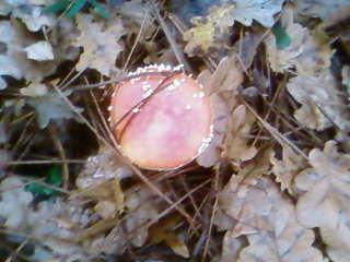 some mushroom ( pas ceux de mario bros ) Sp_a3321