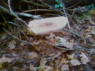 some mushroom ( pas ceux de mario bros ) Sp_a3323