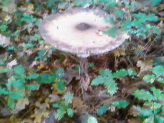 some mushroom ( pas ceux de mario bros ) Sp_a3325
