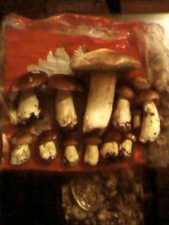 some mushroom ( pas ceux de mario bros ) Sp_a3328