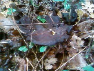 some mushroom ( pas ceux de mario bros ) Sp_a3330
