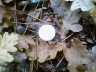 some mushroom ( pas ceux de mario bros ) Sp_a3331