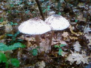 some mushroom ( pas ceux de mario bros ) Sp_a3332