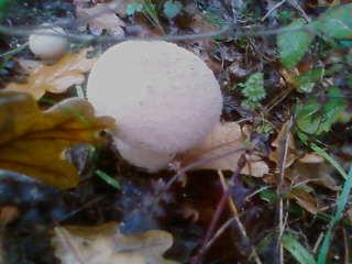 some mushroom ( pas ceux de mario bros ) Sp_a3334