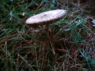 some mushroom ( pas ceux de mario bros ) Sp_a3335