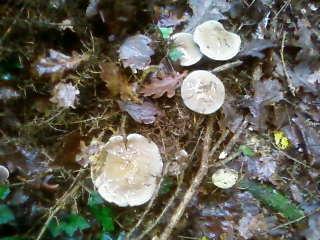 some mushroom ( pas ceux de mario bros ) Sp_a3342