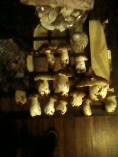 some mushroom ( pas ceux de mario bros ) Sp_a3347