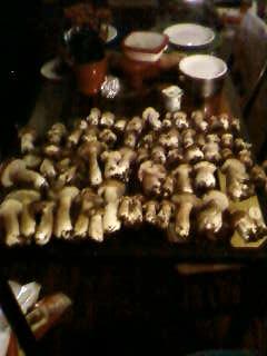 some mushroom ( pas ceux de mario bros ) Sp_a3348