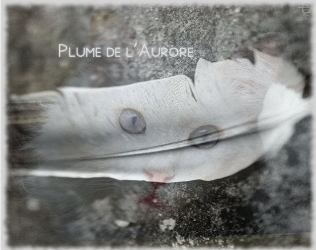 Cours d'Aurore & Soleil [Gimp] - Page 2 Plume_14