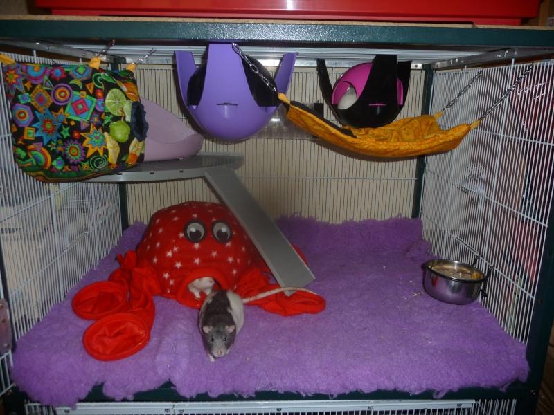 Photos de vos cages - Page 21 P1080715