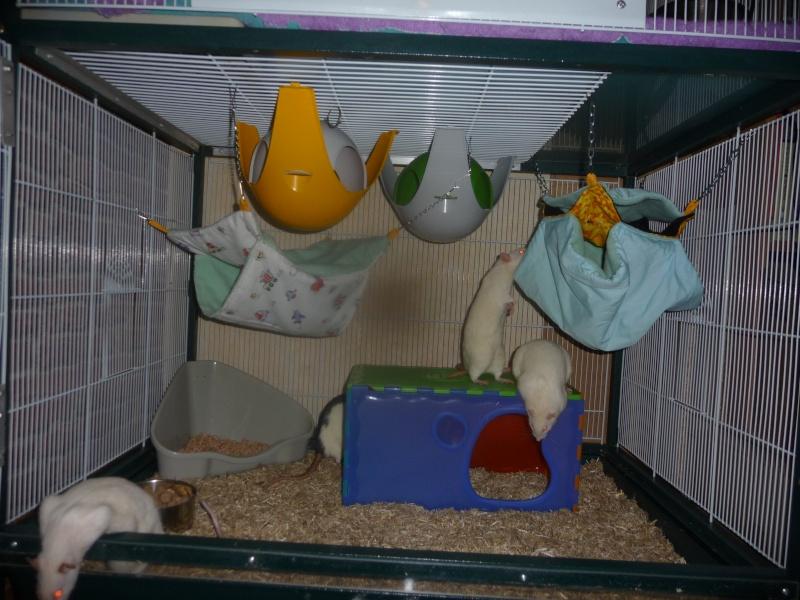 Photos de vos cages - Page 21 P1080716