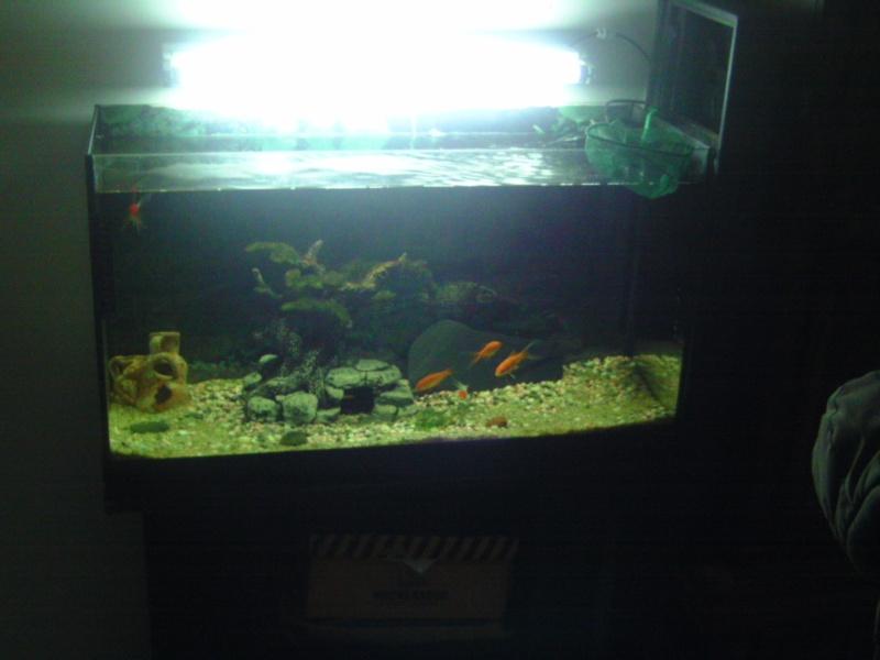 aquariums draco53 Bild1510