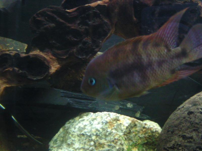 aquariums draco53 Bild1511