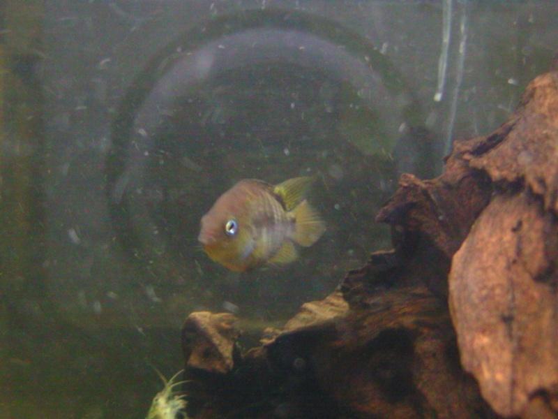 aquariums draco53 Bild1513