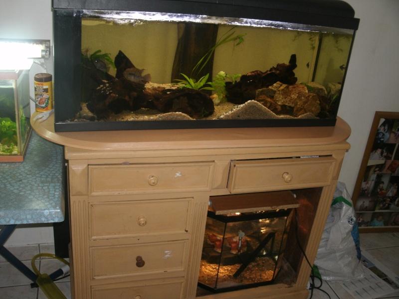 aquariums draco53 Gedc1110