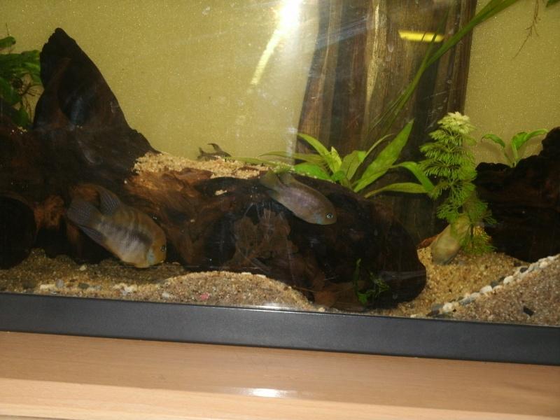 aquariums draco53 Gedc1112