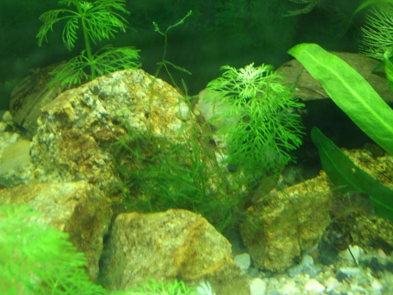 aquariums draco53 Gedc1113