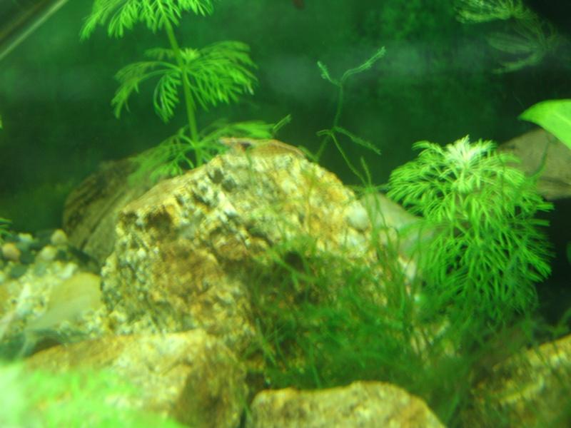 aquariums draco53 Gedc1114
