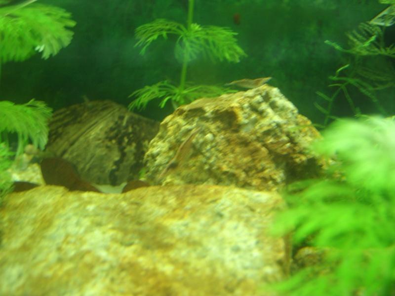 aquariums draco53 Gedc1210