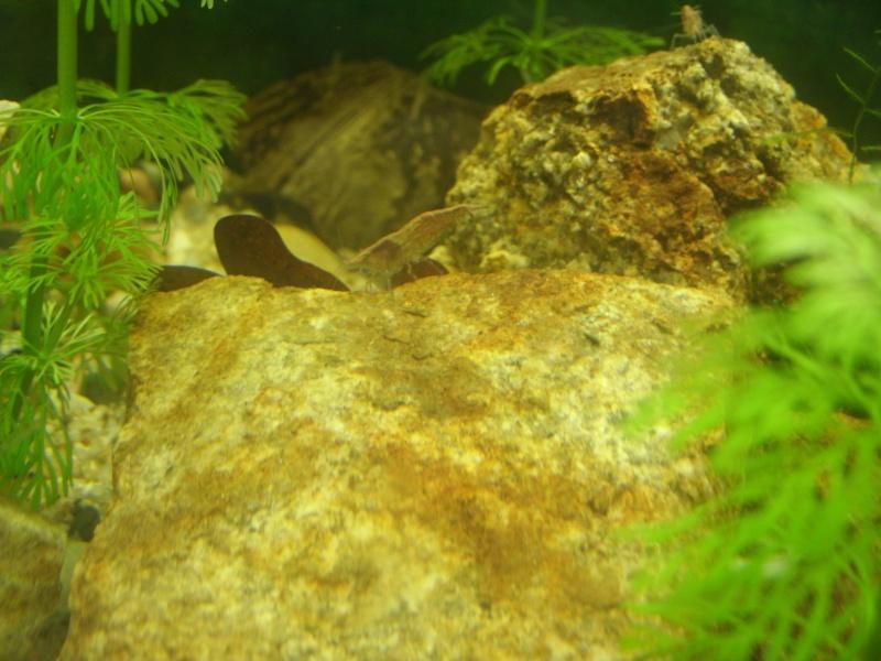 aquariums draco53 Gedc1211