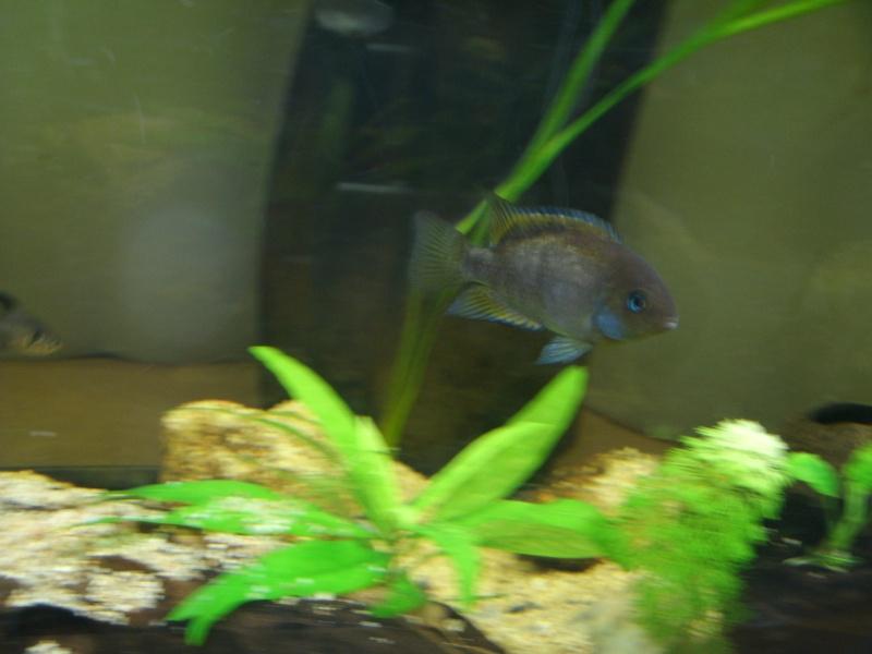 aquariums draco53 Gedc1213