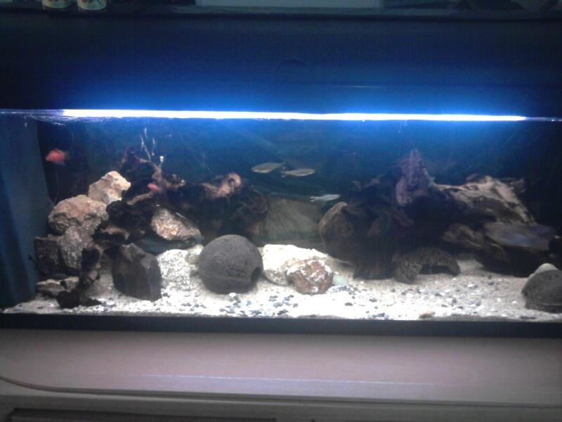 aquariums draco53 Photo010