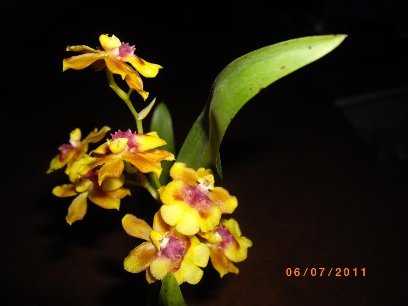 mes orchidées Imgp5010