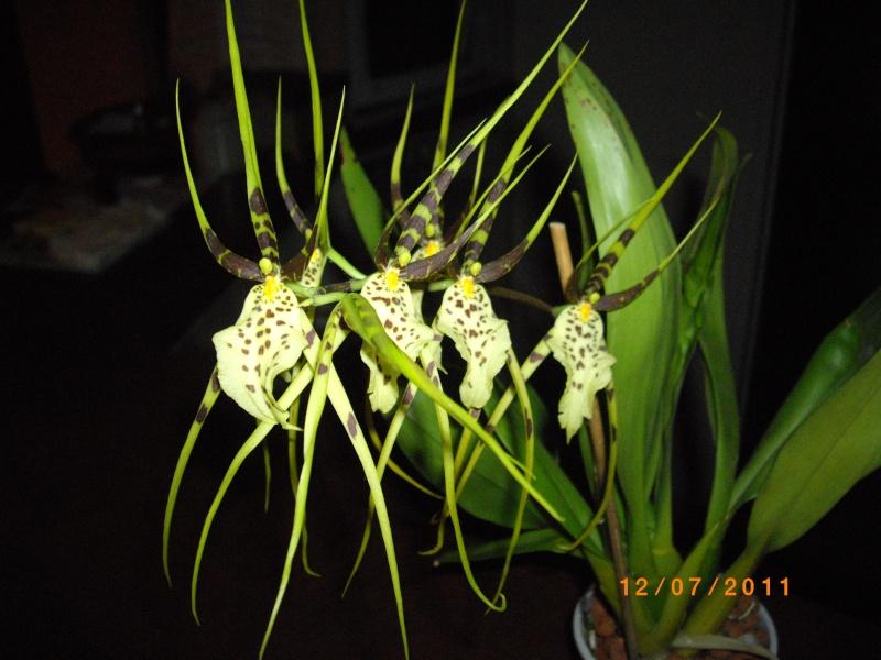 mes orchidées Imgp5210