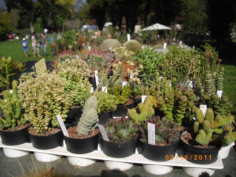 Journées des plantes d'Aiguebelette (73) : 1 et 2 octobre 2011 Imgp6811