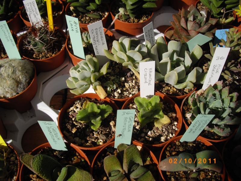 Journées des plantes d'Aiguebelette (73) : 1 et 2 octobre 2011 Imgp6813