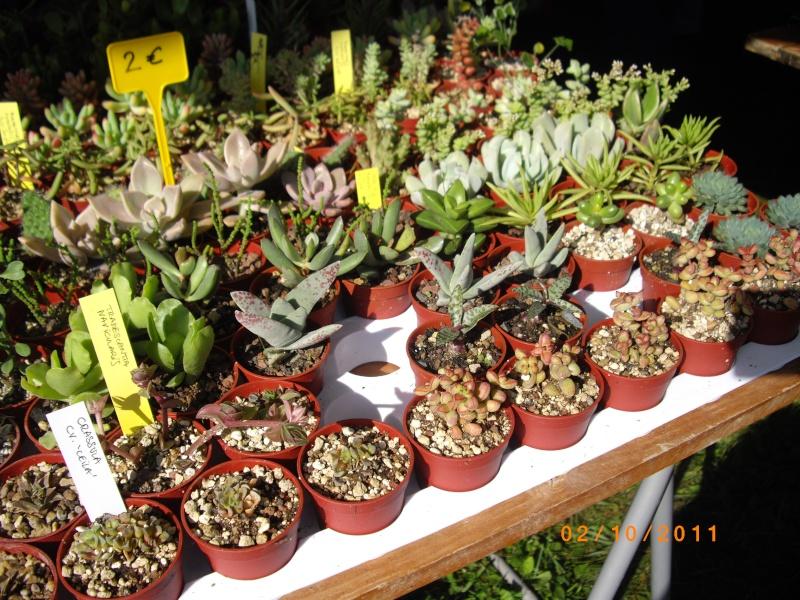 Journées des plantes d'Aiguebelette (73) : 1 et 2 octobre 2011 Imgp6814