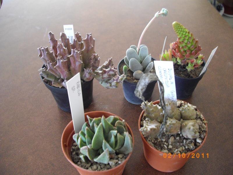 Journées des plantes d'Aiguebelette (73) : 1 et 2 octobre 2011 Imgp6910