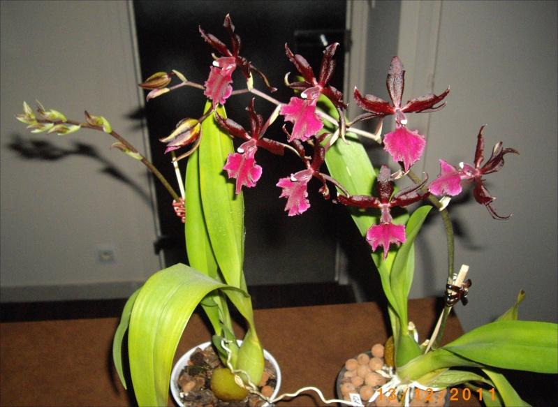 Mes orchidées... par Stape73 Imgp8611