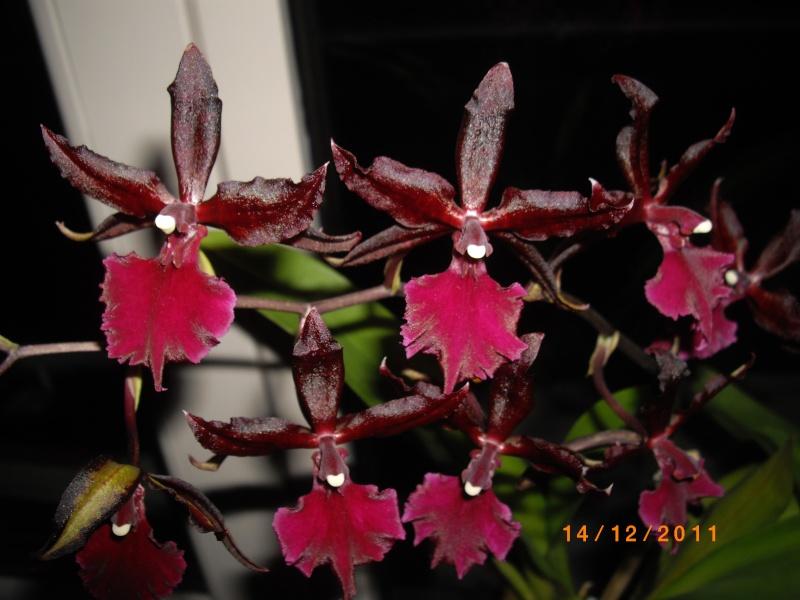 Mes orchidées... par Stape73 Imgp8613