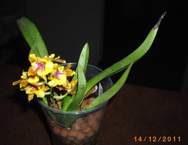 Mes orchidées... par Stape73 Imgp8614