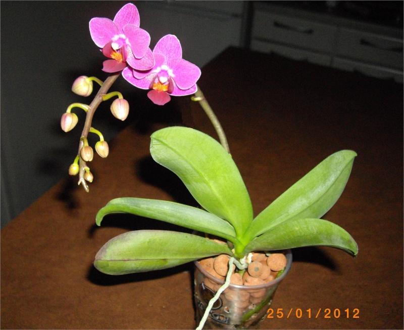 Mes orchidées... par Stape73 - Page 3 Imgp9113