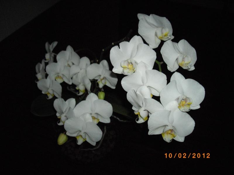 Mes orchidées... par Stape73 - Page 3 Imgp9210