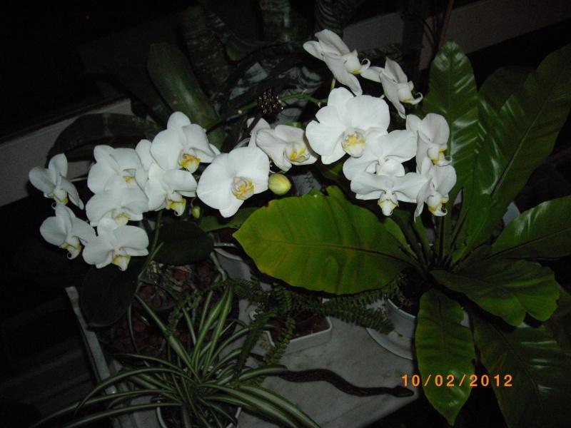 Mes orchidées... par Stape73 - Page 3 Imgp9211