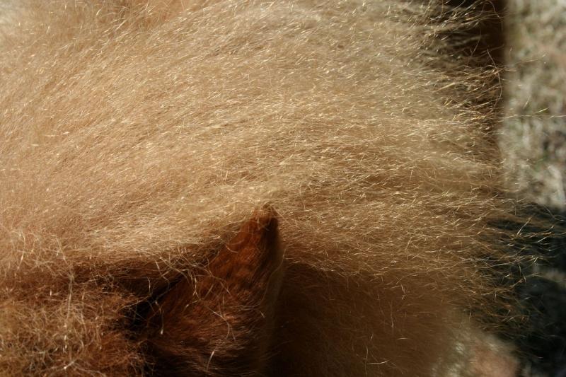 thème mai 2012: un bout de cheval !  Bogoss65