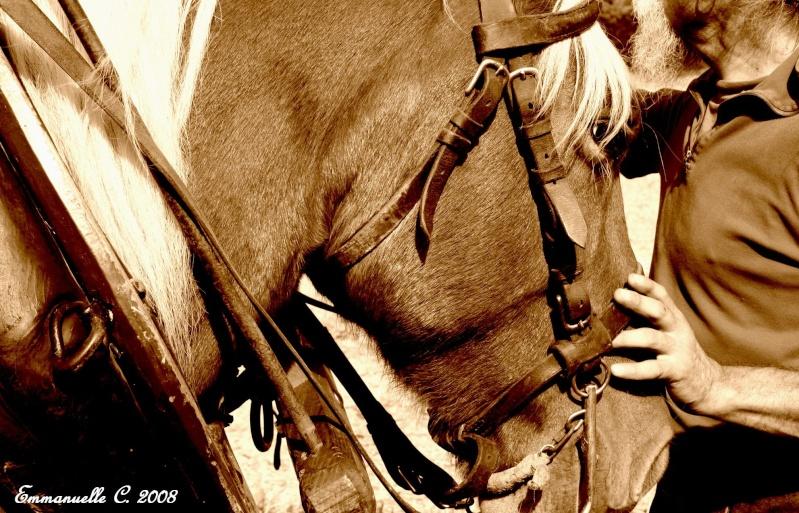 Concours Photo Juillet : Quand Cheval rime avec Poésie... Serpai10