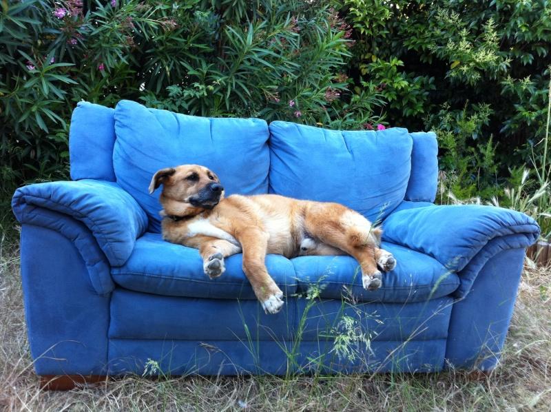 Mon beau Pasha est parti au paradis des chiens Img_9710