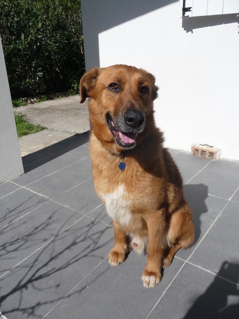 Mon beau Pasha est parti au paradis des chiens P1020110