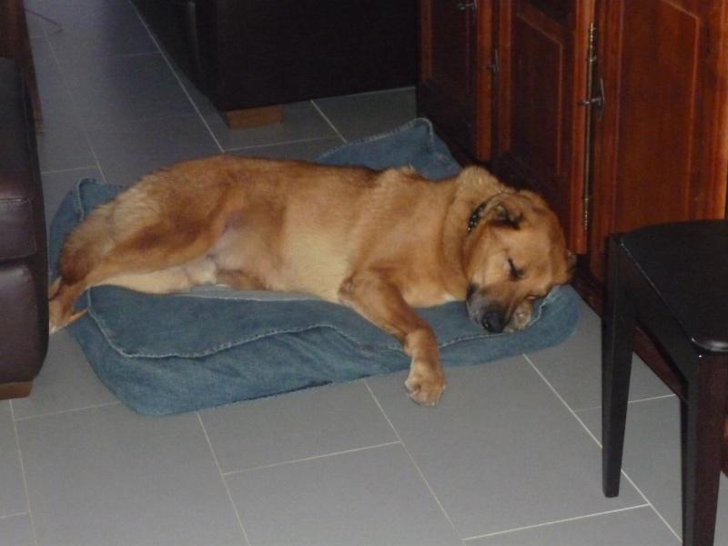 Mon beau Pasha est parti au paradis des chiens P1020810